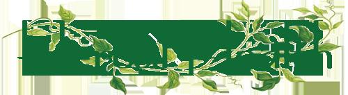 Herbal-Health1-e1445683002781
